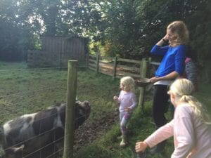 Feeding the pigs at Tredethick